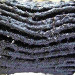Moisture in diesel may result in bacteria